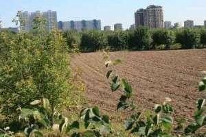 Сельхозакадемию им Тимирязева превращают в коттеджный поселок