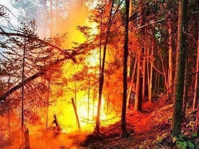 Более 30 км трассы перекрыто в Приамурье из-за природного пожара