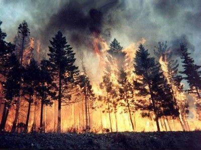 За сутки в России сгорело 15 тысяч гектаров леса