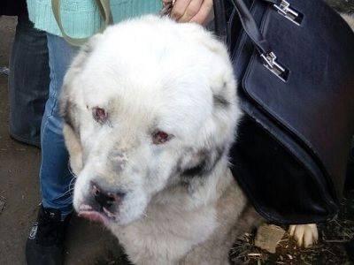 Генпрокуратура возбудила более 40 дел из-за нарушений в приютах для животных