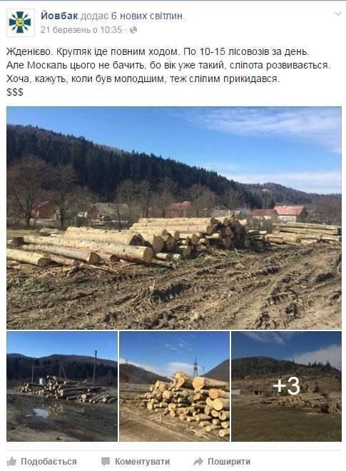 Сольвар зарабатывает миллионы на незаконной вырубке леса и его экспорте в Румынию