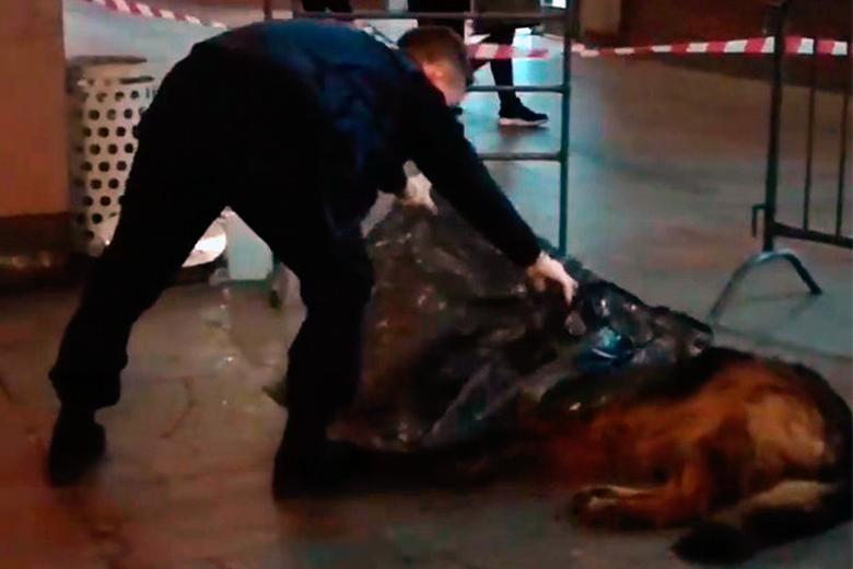Полицейский застрелил собаку на станции метро «Цветной бульвар» в Москве