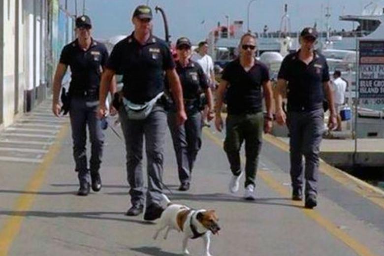 Мафия назначила награду в 370 тыс. за голову служебной собаки с супернюхом