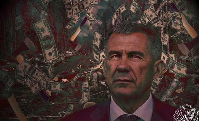Сказочная тайга. Близкие Рустама Минниханова «насобирали» в лесу 713,7 млн рублей