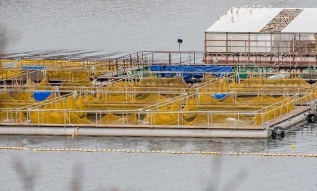 Владелец «китовой тюрьмы» решил выполнить поручение президента и отпустить животных