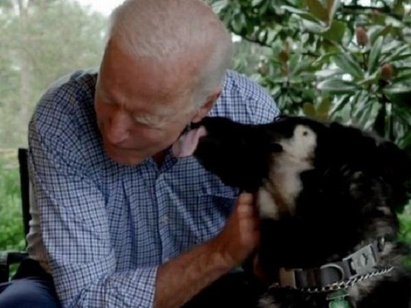 Джо Байден въедет в Белый дом с двумя собаками – одна из них войдет в историю резиденции президента