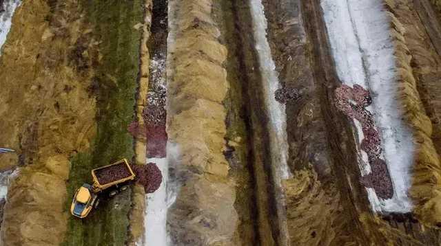 В Дании «поднялись из-под земли» убитые из-за коронавируса норки