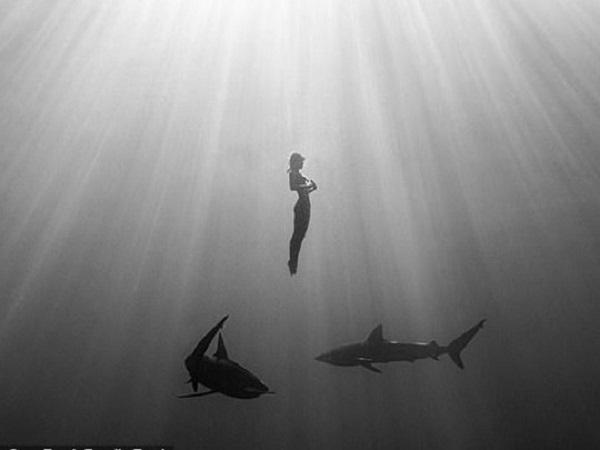 Скандально известная модель Playboy сделала голую фотосессию под водой с акулами-людоедами