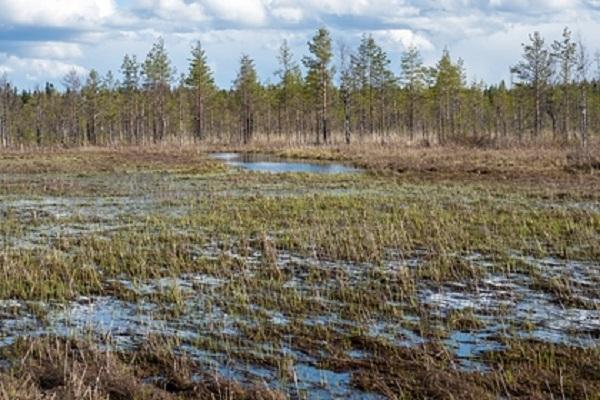 В ХМАО в болото упал гидросамолет