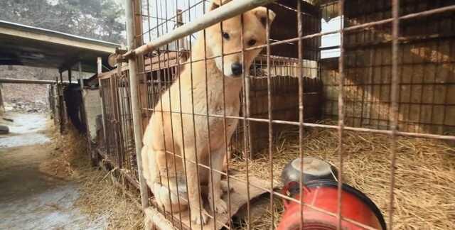 В Южной Корее запретят есть собак